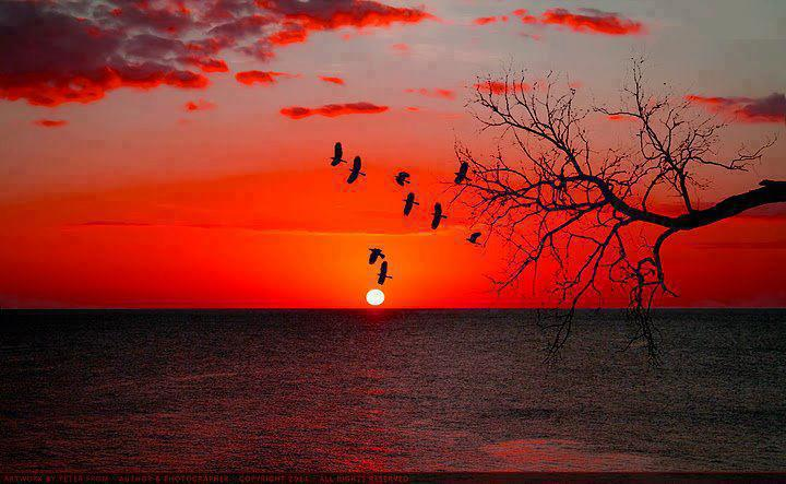 Flock of bird at sunset